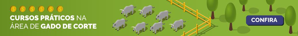 Cursos práticos na área de gado de corte
