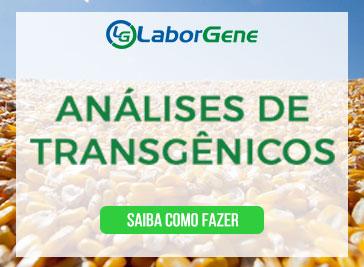 Análise de Transgênicos