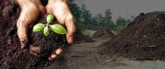 Compostagem e adubação orgânica: produtividade com proteção ao meio ambiente.