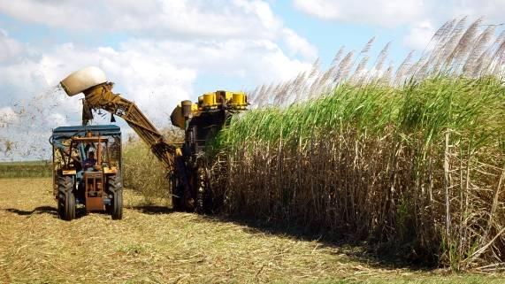 Agroindústria canavieira - desafios e oportunidades