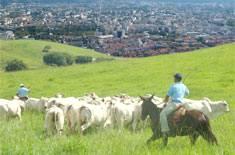 Curso de Desenvolvimento e Produção Sustentável da Bovinocultura em seu Município