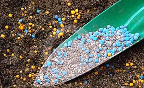 Fertilizantes: saiba como fertilizar o solo para aumentar sua produção