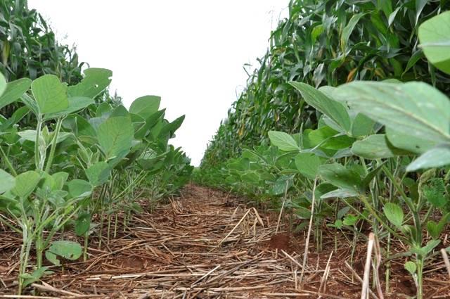 Integração de lavoura e pastagens contribui para a qualidade ambiental