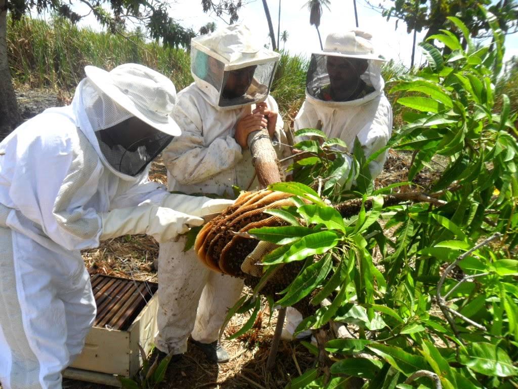 Os nove passos para se tornar um apicultor