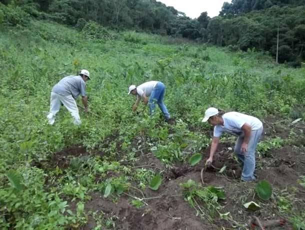Produtores desconhecem linha de crédito para projetos sustentáveis na agricultura