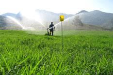 Professor Gustavo Haddad fala sobre irrigação e manejo de pastagens