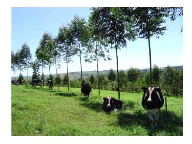 Programa ABC - Agricultura de Baixo Carbono - ILPF
