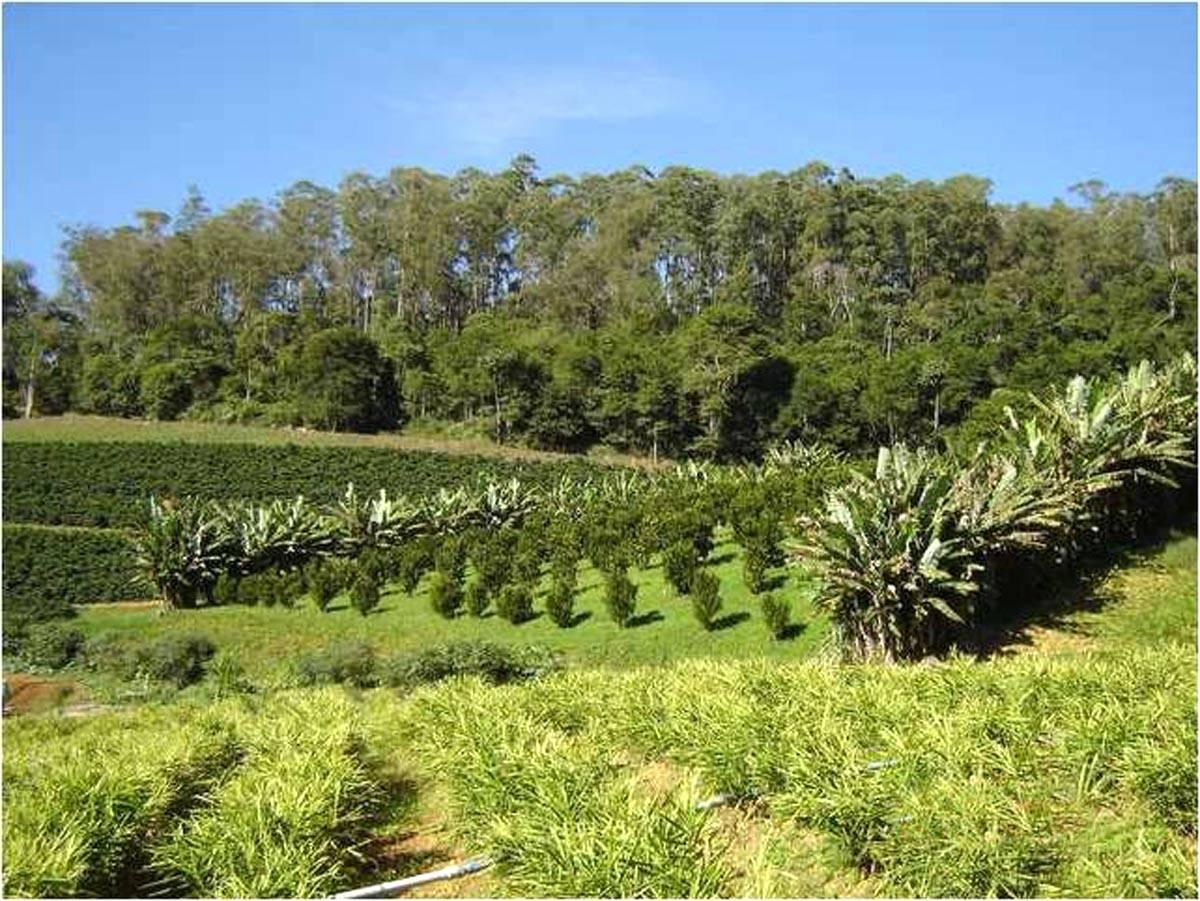 Sistemas agroflorestais - ecologia e produção