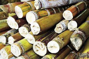 V Simpósio de tecnologia de produção da cana-de-açúcar