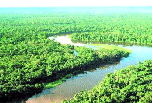 Cientistas pesquisam solo fértil amazônico
