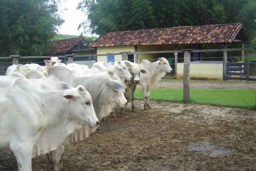 Maior lucro e melhor qualidade: tempo para abate de bovinos cai para menos de dois anos