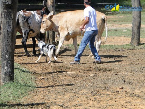 Fotos do 2º Curso de Treinamento Avançado em Cães Pastoreios 20-04-2012