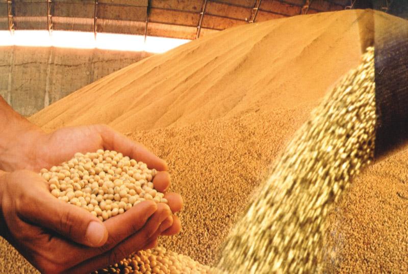 Estimativa da safra de soja elevada nos EUA