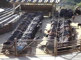 Instalações destinadas à criação de caprinos e ovinos