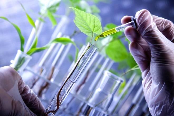 Biopesticidas podem substituir agrotóxicos