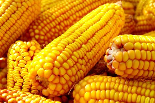 Escassez de milho faz produtores de carne recorrem ao trigo