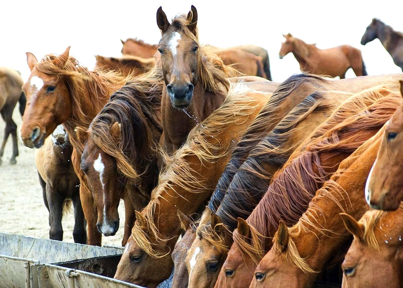 Os Efeitos da Nutrição nos Cavalos