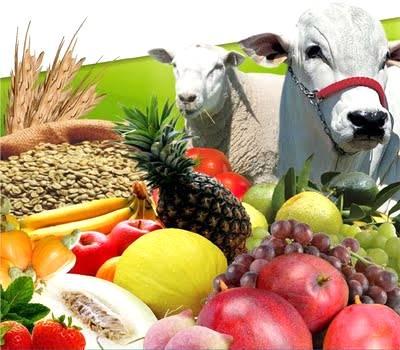 Ministro revela meta ambiciosa para a produção agropecuária dos próximos anos