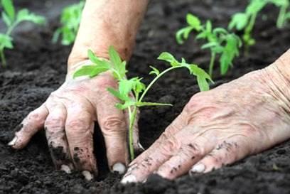 Agricultura orgânica ganha destaque no Noroeste do Rio