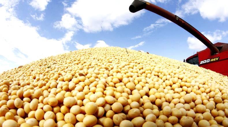 China diminui em 18% as importações de soja do Brasil no mês de julho