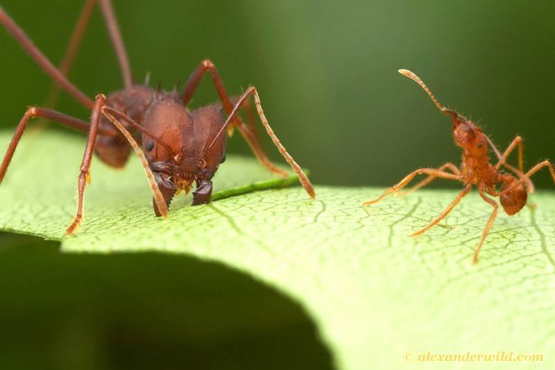 Formigas prejudiciais às lavouras