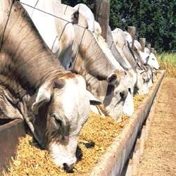 O alto consumo de proteína no Brasil