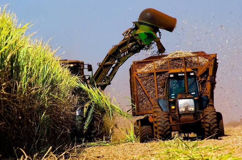 Colheita de cana de açúcar deve ser antecipada com risco de chuvas