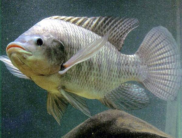 Cooperativa usa resíduos de peixe para produzir biodiesel