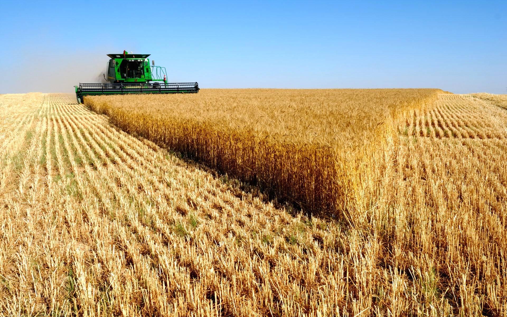 Crescem exportações do agronegócio brasileiro