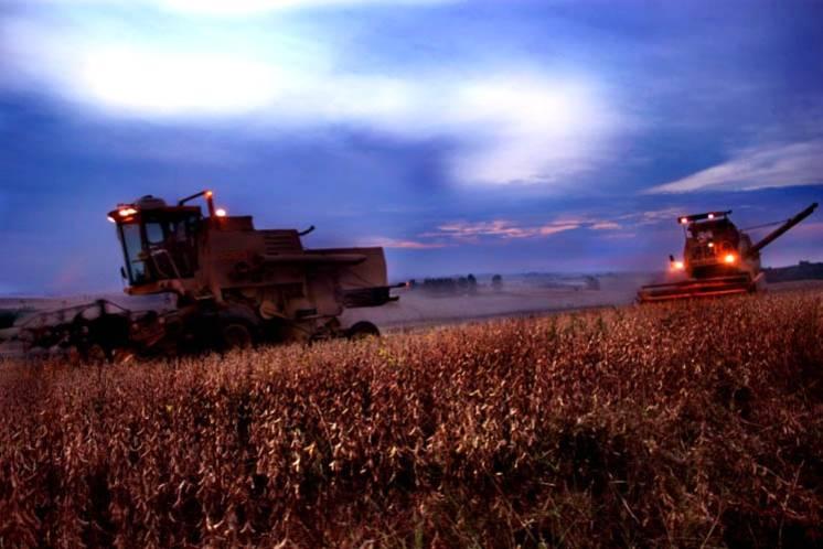 Governo divulga zoneamento agrícola das culturas de verão