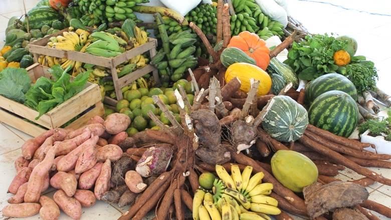 Pequenos produtores gaúchos se destacam na agroindustrialização