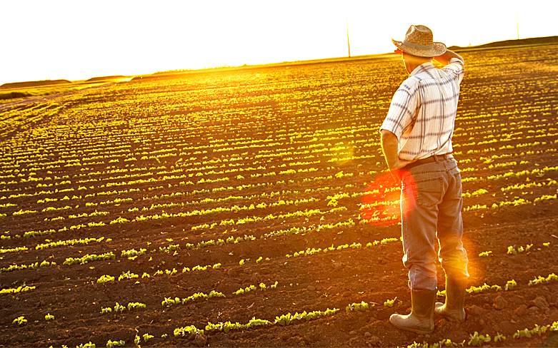 Plano Agrícola e Pecuário 2016 e 2017