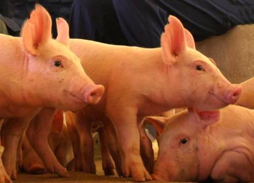 Audiência pública no Amapá debate produção clandestina de carnes