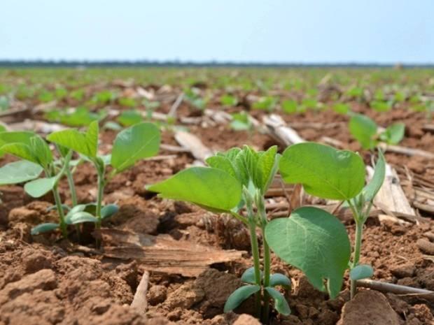 Clima pode atrapalhar projetos agrícolas em vários estados