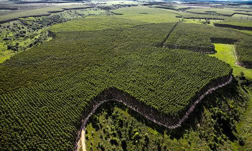 Mato Grosso do Sul investe na geração de energia a partir da biomassa