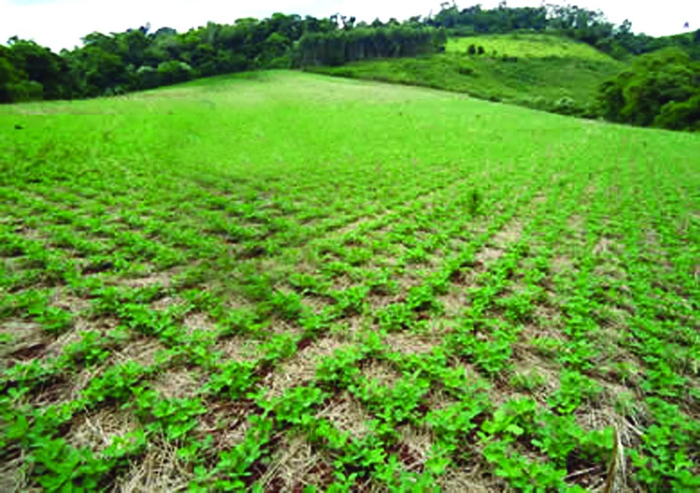 Reunião dos Brics aborda soluções em prol da segurança alimentar mundial