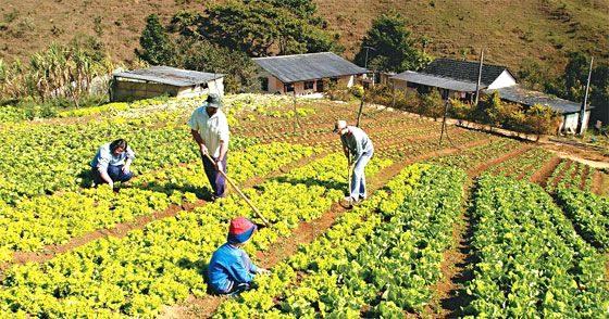 São Paulo apresenta grande aumento da produção na agricultura
