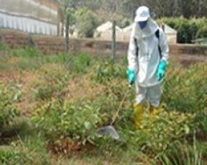 Prevenir plantas daninhas é garantir o sucesso da cultura