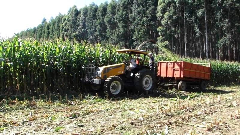Como produzir silagem de milho com qualidade