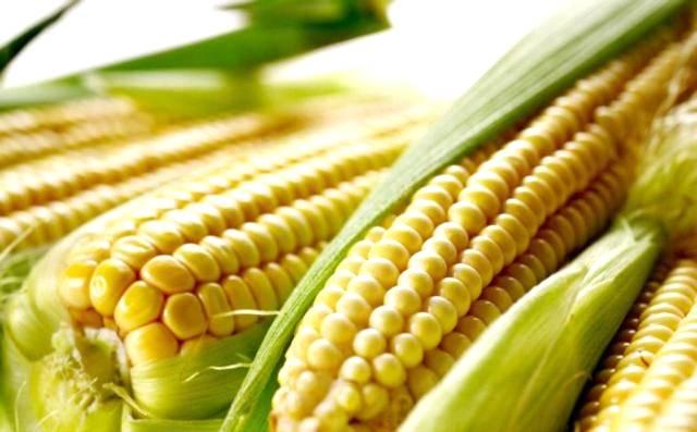 Mercado de grãos transgênicos