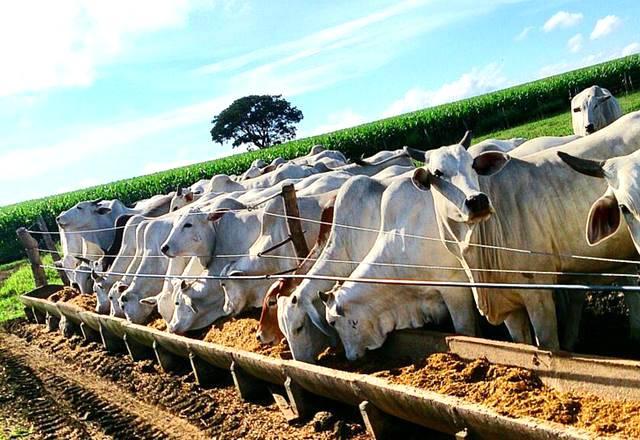 Palha beneficiada auxilia na alimentação do gado