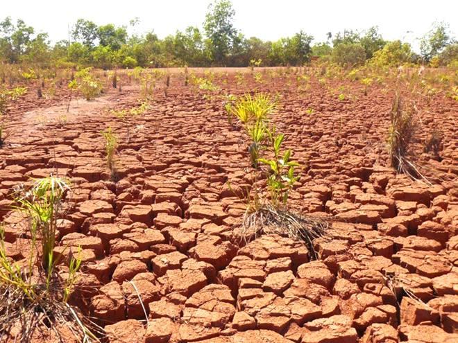 Recuperação de áreas degradadas - Dicas fundamentais para um novo plantio