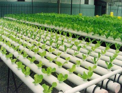 Sistema de cultivo hidropônico cresce nos centros urbanos