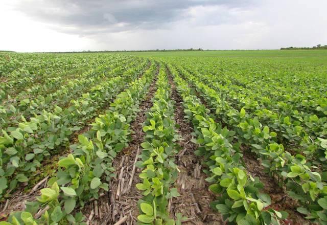 O manejo de pragas em culturas de soja