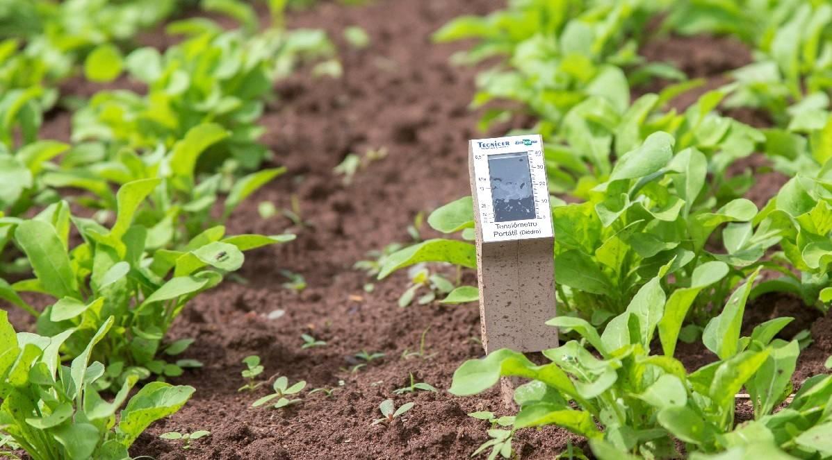 Sensor para irrigação