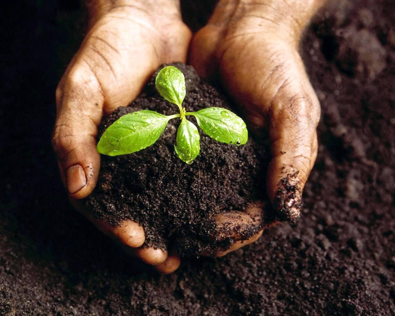 Terras improdutivas podem ser mudadas com manejo adequado