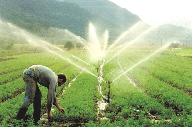 A importância da agricultura irrigada