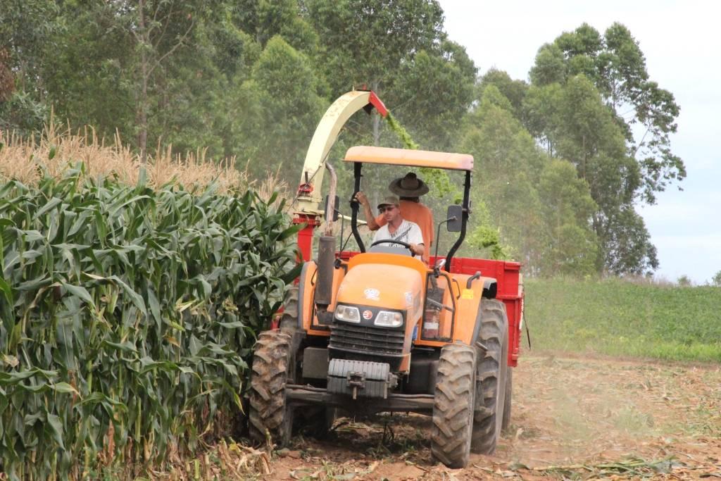 A importância da silagem do milho