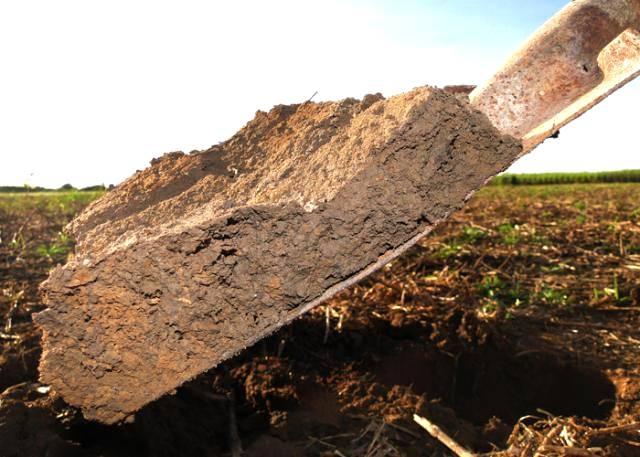 Recuperação de solos e áreas degradadas é crescente no mundo