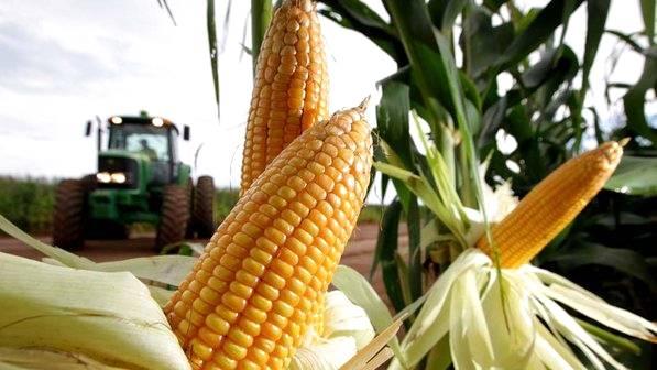 Cultura da produção de milho